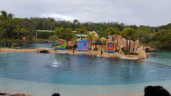 Main Beach, Australia: Affinity Dolphin Show