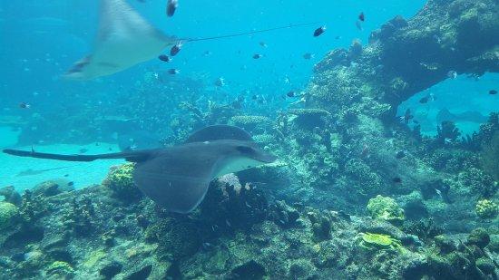 Main Beach, Australia: Shark Bay