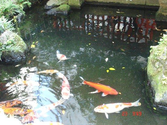 Suikyo Tenmangu Shrine: Koi pond