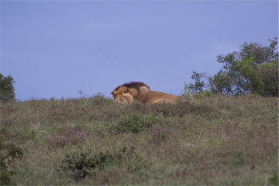 Addo Elephant National Park, South Africa: Addo