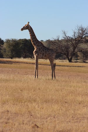 Upington, Güney Afrika: So many animals big and small. No Ellies but the rest in abundance. Too exciting to describe