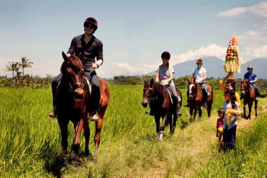 Tegalalang, Indonesia: Horse riding in a verdant rice fields of Bali