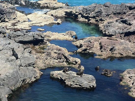 Akaroa, New Zealand: Seals in the water and on the rocks
