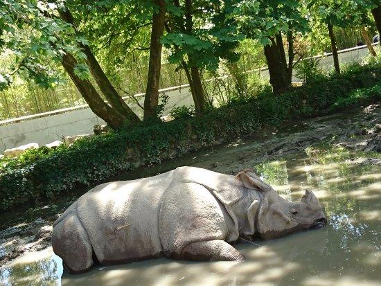 Romaneche-Thorins, Francia: Rhinocéros