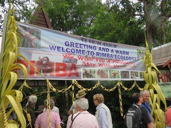 Rimba Orangutan Eco Lodge: Arrival welcome