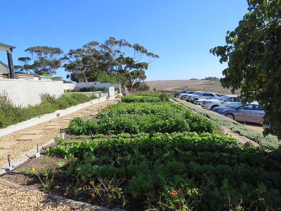 Bredasdorp, Sudafrica: The Vegetable Garden