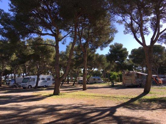 Camping El Garrofer : Camping under Pine trees