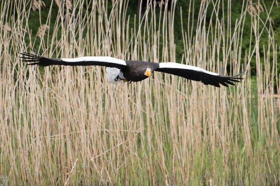 Alphen aan den Rijn, Países Bajos: Er wordt ook veel leerzaams over de vogels verteld.