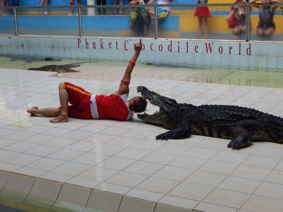 88 Hotel: шоу крокодилов(экскурсия )