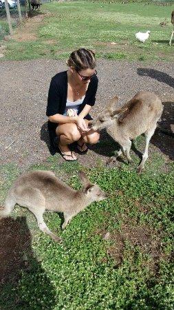 Cannonvale, Australia: photo2.jpg