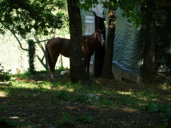 Monteroni d'Arbia, Italia: cavallino