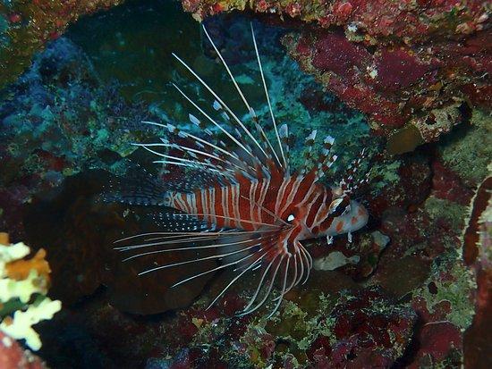 Nautilus Scuba: Lion Fish