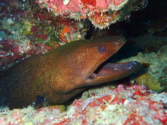 Nautilus Scuba: It's a Moray