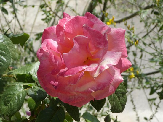 Gibran Museum: gorgeous roses all about the gardens