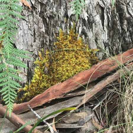 Eaglehawk Neck, Australia: photo8.jpg