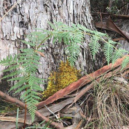 Eaglehawk Neck, Australia: photo9.jpg