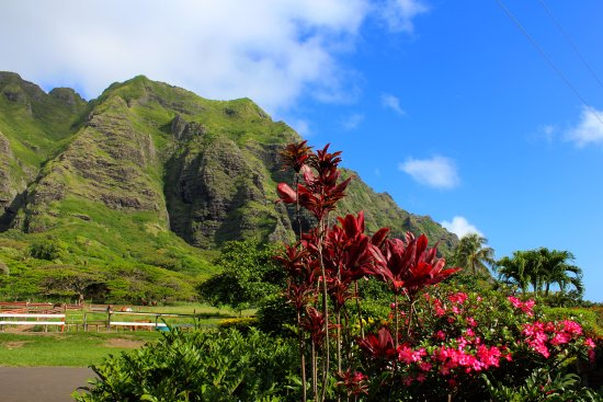 Kaneohe, HI: A beautiful photo from the facility