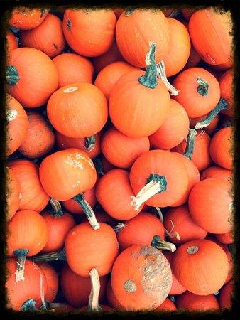 Kent, WA: Carpinitos Pumpkin Patch