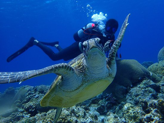 Kadena-cho, Japón: Mergulho em Okinawa com Aloha Divers Okinawa