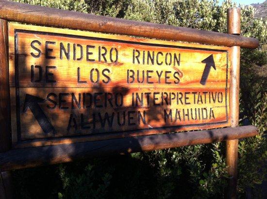 Pirque, Chile: la decisión!!