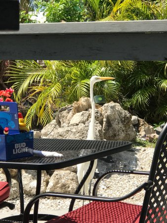 Matlacha, FL: Great Live Entertainment, food and sunsets!