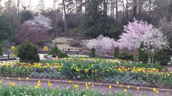 The Main Terraced Flower Beds Picture Of Sarah P Duke Gardens