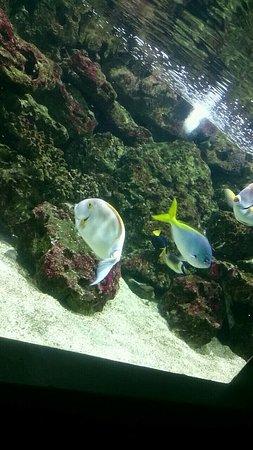 mus 233 um aquarium de nancy picture of museum aquarium de nancy nancy tripadvisor