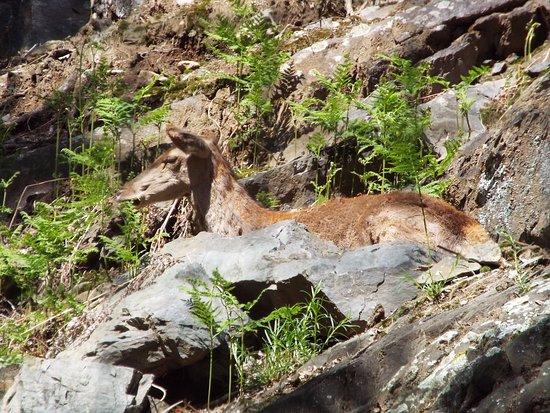 Paspardo, Italie : Cervo