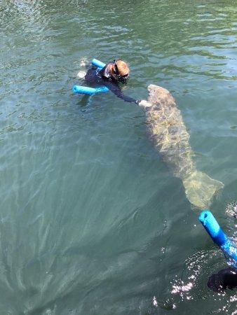 Snorkel With The Manatees : photo0.jpg