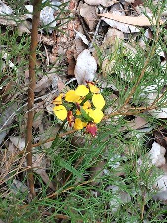 Gooseberry Hill, Australia: Amongst the litter