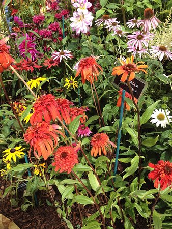 Chelmsford, UK: Flower beda