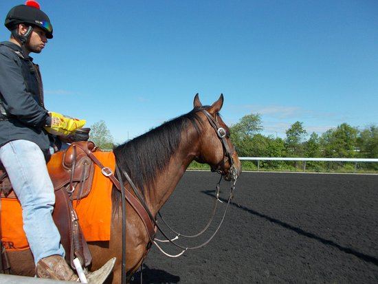 Capital Plaza Hotel: Outrider at Keeneland Racetrack