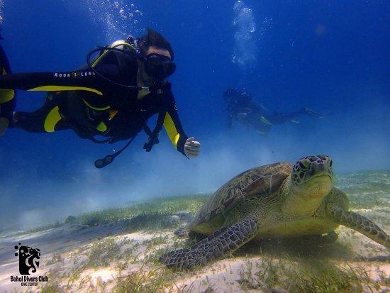 Panglao Island, Filippine: photo0.jpg