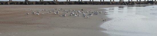 Fernandina Beach, Φλόριντα: photo3.jpg