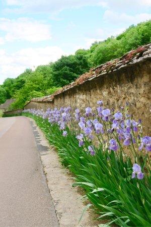 Thury, France : photo1.jpg