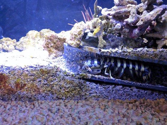 Draper, UT: Mantis Shrimp