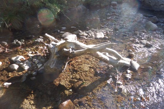 Potrero del Llano, Mexico: agua cristalina