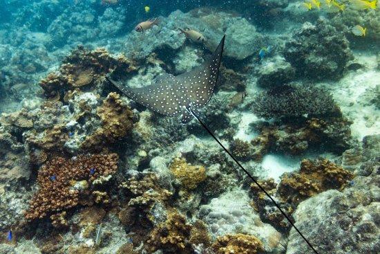 Νήσος Πράσλιν, Σεϋχέλλες: photo2.jpg