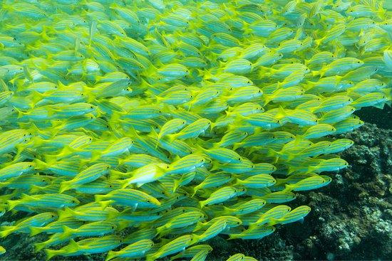 Isla Praslin, Seychelles: photo6.jpg