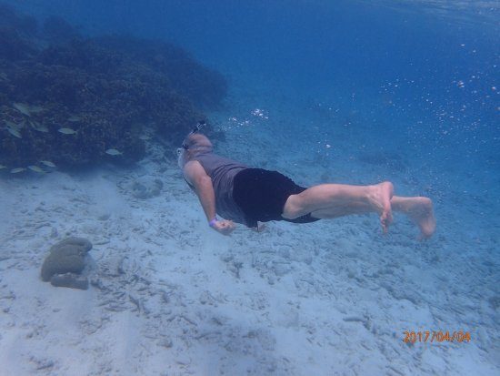 Plaza Resort Bonaire: Great snorkeling with great view of the coral formations