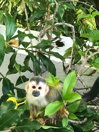 Gaia Hotel & Reserve: Saw many monkeys at different times on the hotel property!