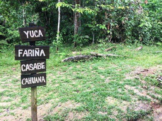 cocina indígena - Picture of Parque Ecologico Mundo Amazonico ...