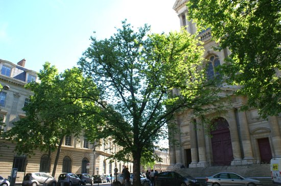 L'Orme de Saint Gervais