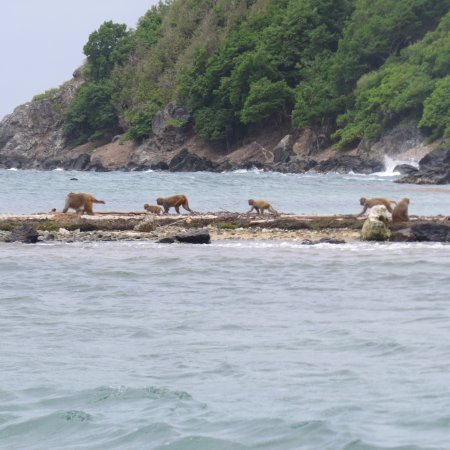 Monkey Island Puerto Rico Reviews