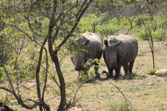 Addo Elephant National Park, Sudáfrica: On this trip in 2016, there were many rhinos to be seen