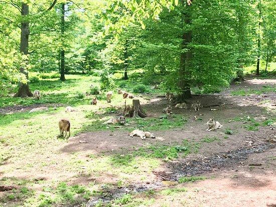 Wildpark Schloss Tambach: photo1.jpg
