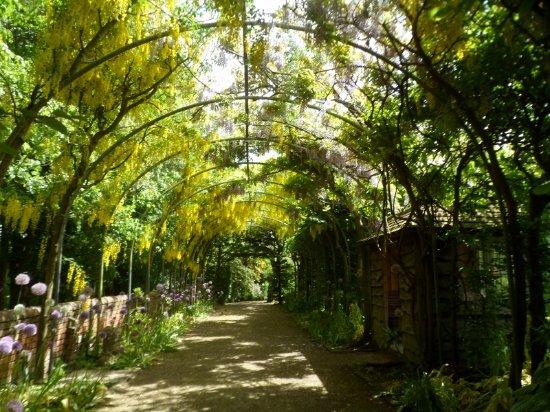 Malmesbury, UK: The Laburnum Walkway.