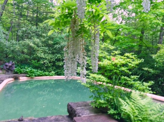 Mill Run, PA: Guest house pool with wisteria