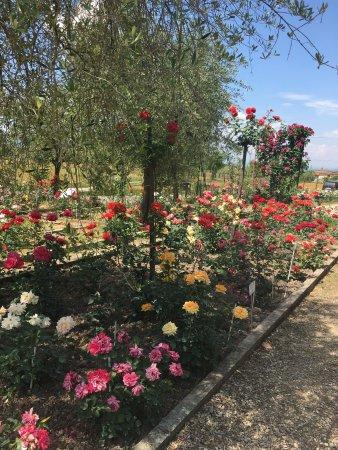 Roseto Botanico Carla Fineschi: photo3.jpg