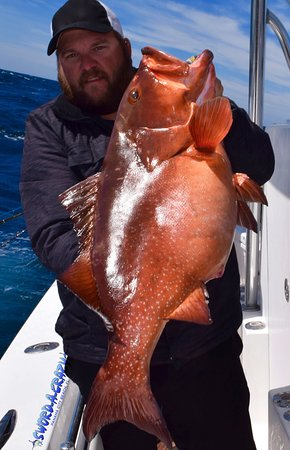 Panama City Beach, FL: Red Grouper